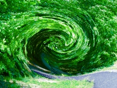 Wormhole in the Trees